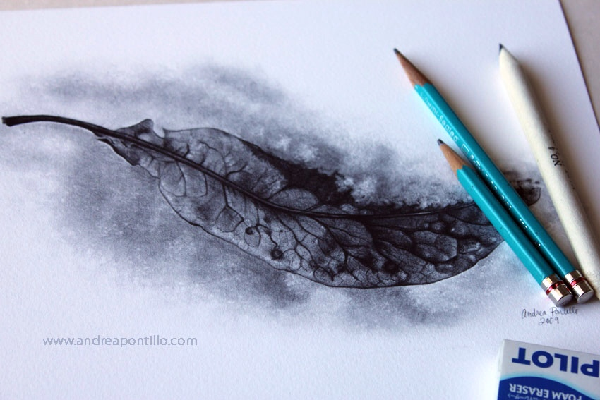 Leaf in snow graphite pencil drawing